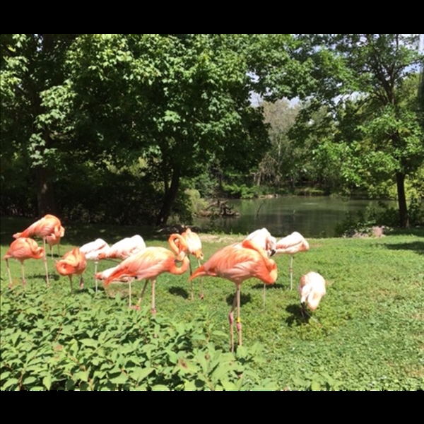 Chill with the flamingos